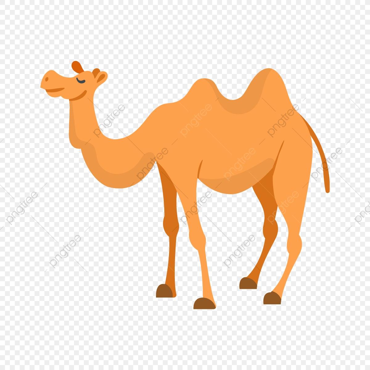 Cartoon isolated journey illustration. Camel clipart transparent background