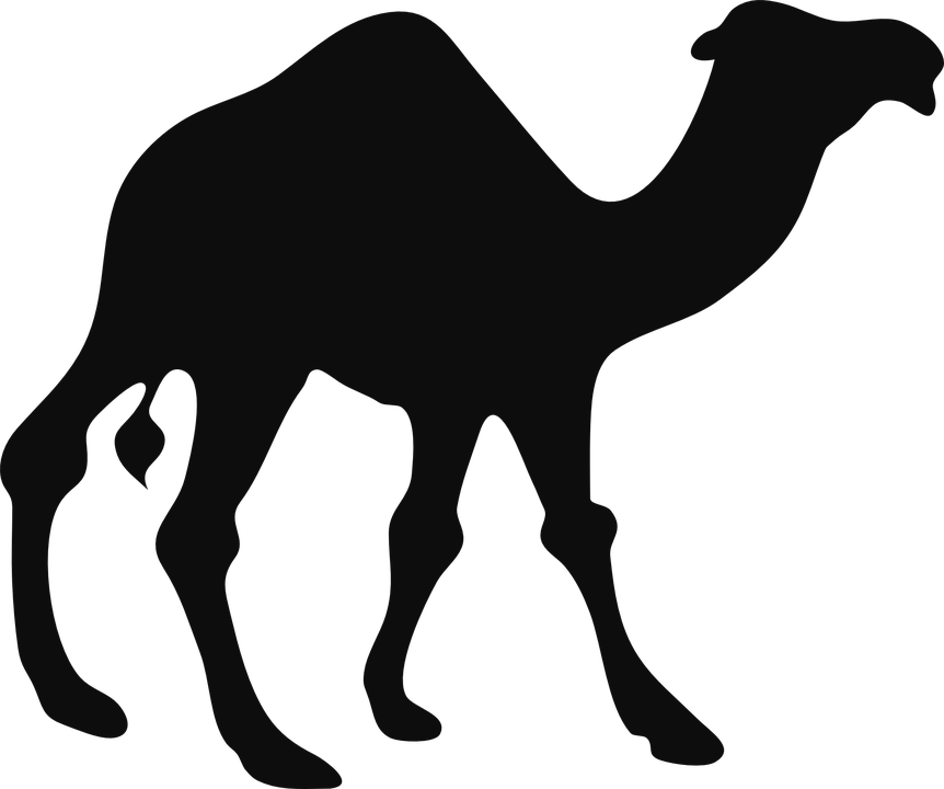 Pin on . Camel clipart vector