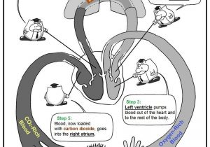 Cancers of the stepstep. Cancer clipart circulatory system