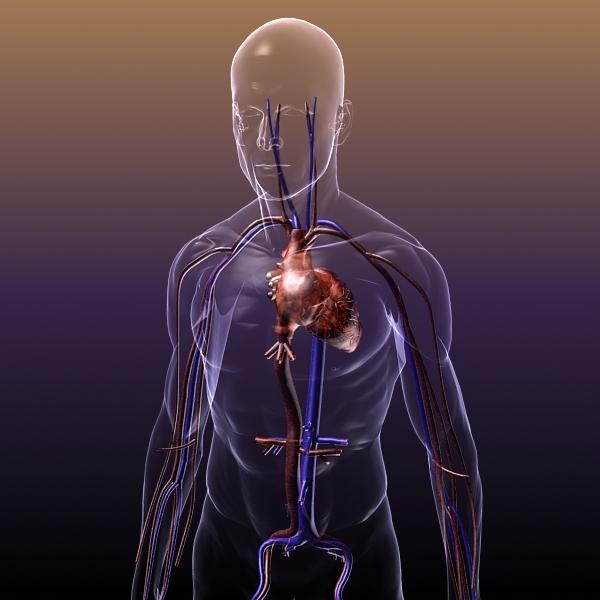Xlskoor. Cancer clipart circulatory system