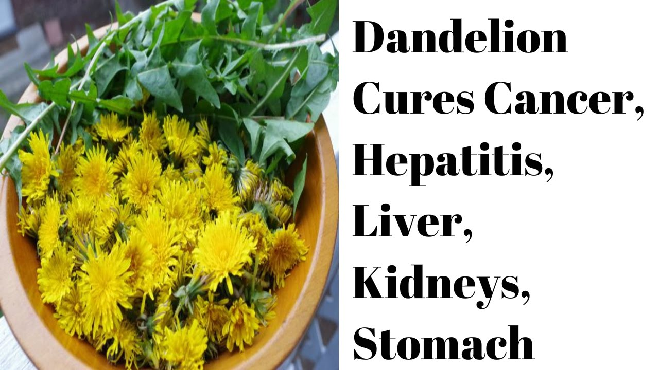 dandelion cures hepatitis. Cancer clipart cure cancer
