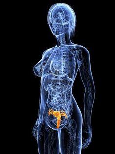 Uk s longest survivor. Cancer clipart liver transplant