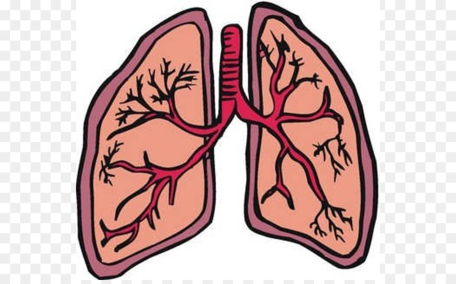Cancer clipart respiratory disease. Lung organ clip art