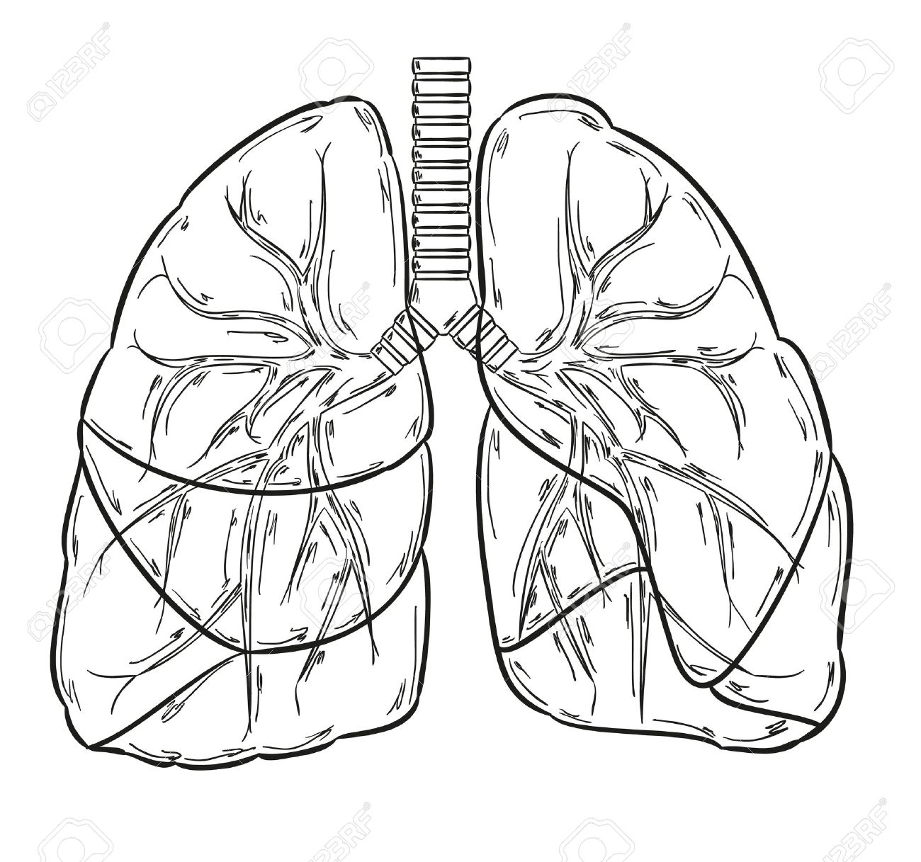 Lung drawing at getdrawings. Cancer clipart sketch