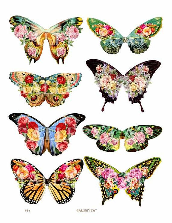 best art images. Cards clipart butterfly