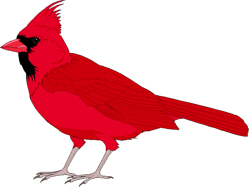 Cardinal clipart. Red
