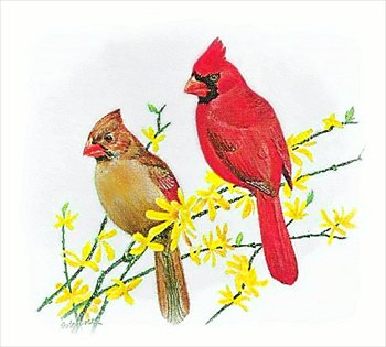 Free graphics images and. Cardinal clipart