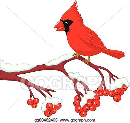Vector art cartoon beautiful. Cardinal clipart animated