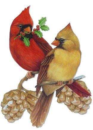 best clip art. Cardinal clipart baby