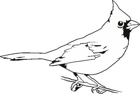 Cardinal clipart black and white. Google search birds pinterest