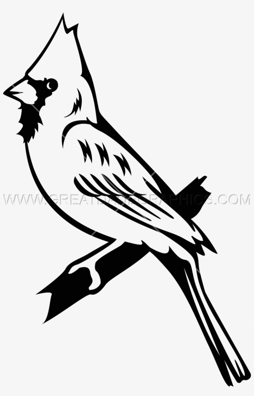 Bluejay drawing whi png. Cardinal clipart black and white