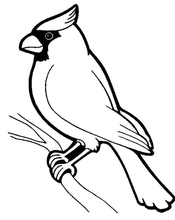 Bird drawing at getdrawings. Cardinal clipart black and white