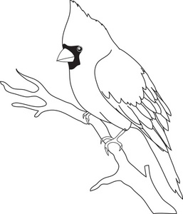 Cardinal Black And White Clipart