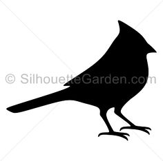 Pictures of birds bird. Cardinal clipart black and white