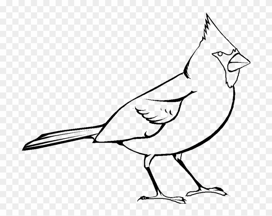 Cardinal clipart black and white.  collection of red