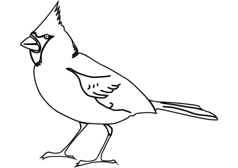 Cardinal clipart black and white. Northern coloring page free
