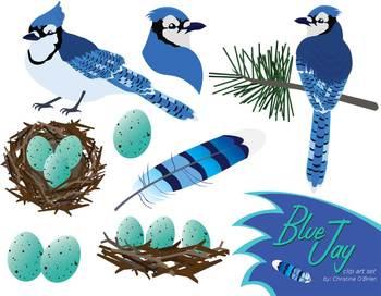 Bird clip art set. Cardinal clipart blue jay