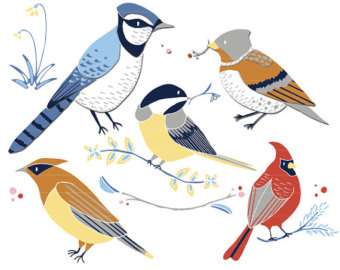 Cardinal clipart blue jay. Birds clip art graphics