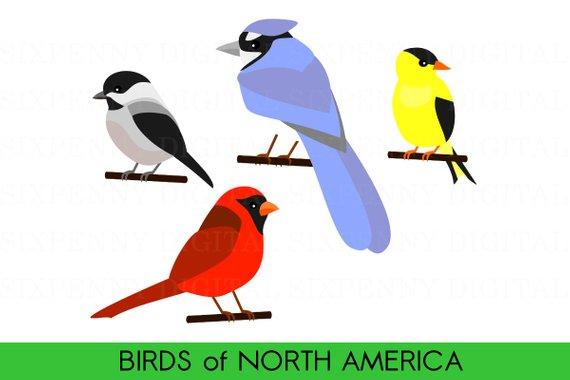 Cute bird birds of. Cardinal clipart blue jay