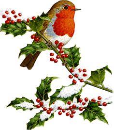Clip art christmas border. Cardinal clipart borders