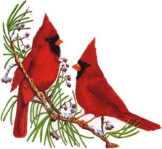 Cardinal clipart borders. Winter free clipartuse