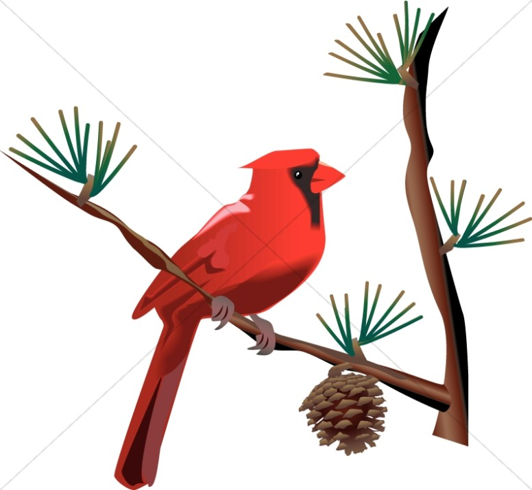 Red on branch wildlife. Cardinal clipart borders