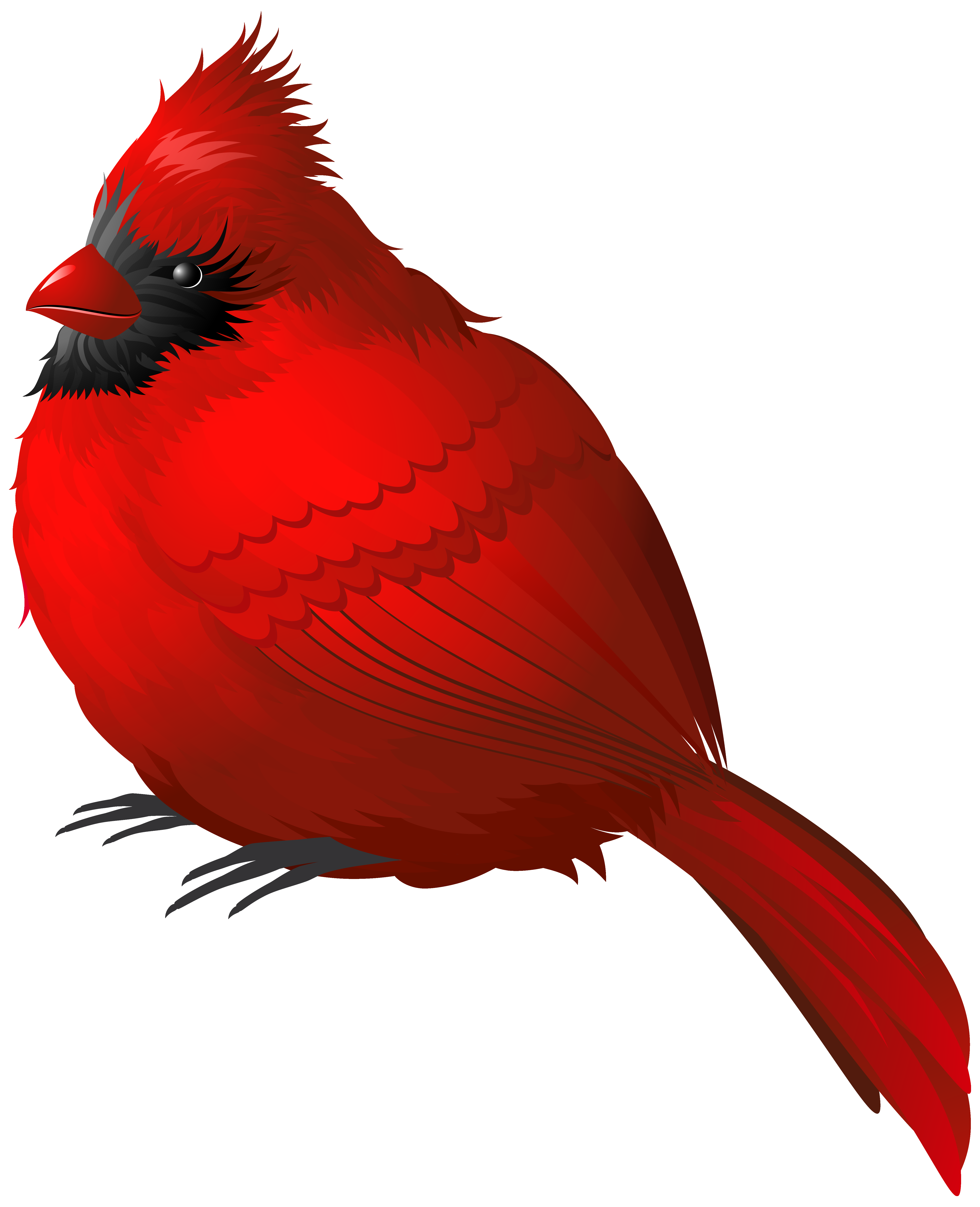 Cardinal clipart borders. Red winter bird png