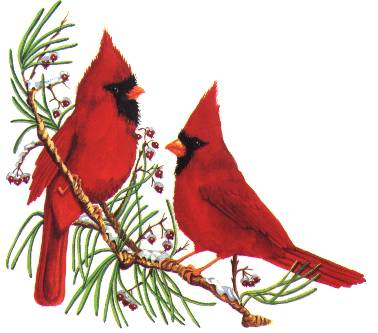Cardinals group red winter. Cardinal clipart branch clipart