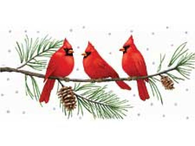 Free on dumielauxepices net. Cardinal clipart branch clipart