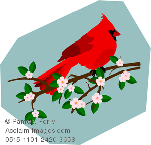 Clip art illustration of. Cardinal clipart branch clipart