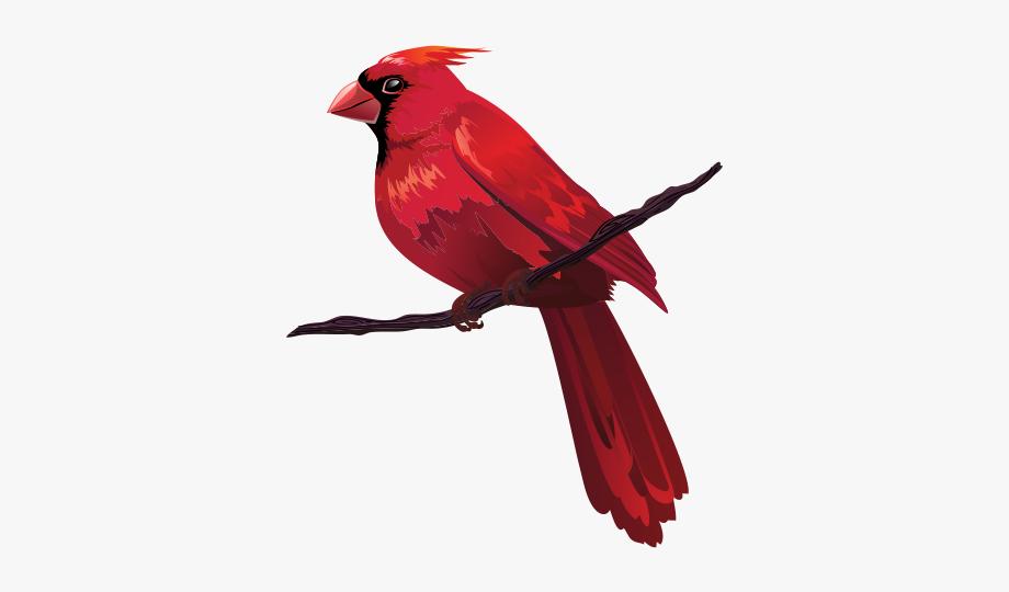 Cardinal clipart branch clipart. Bird euclidean clip on