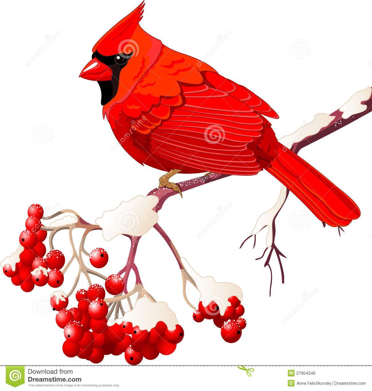 Bird free google search. Cardinal clipart branch clipart