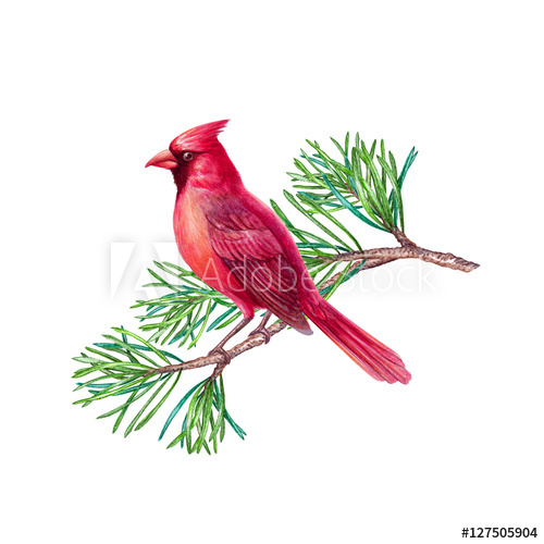 Cardinal clipart branch clipart. Red bird christmas holiday