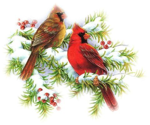 Cardinal clipart branch clipart. Pin by on pinterest