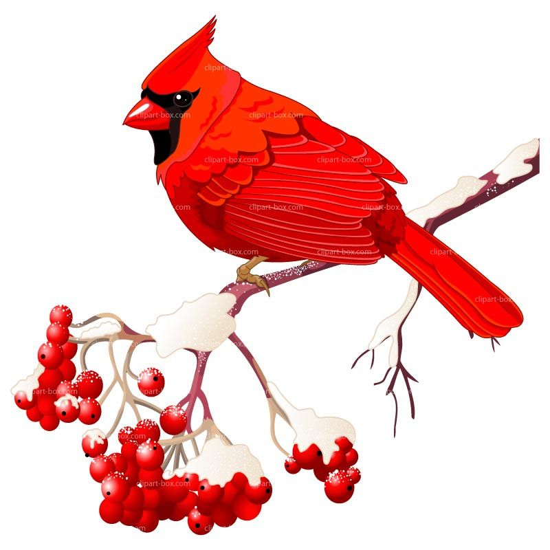 Free clip art bird. Berries clipart winter