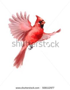 Cardinal clipart cute. Air animal free collection