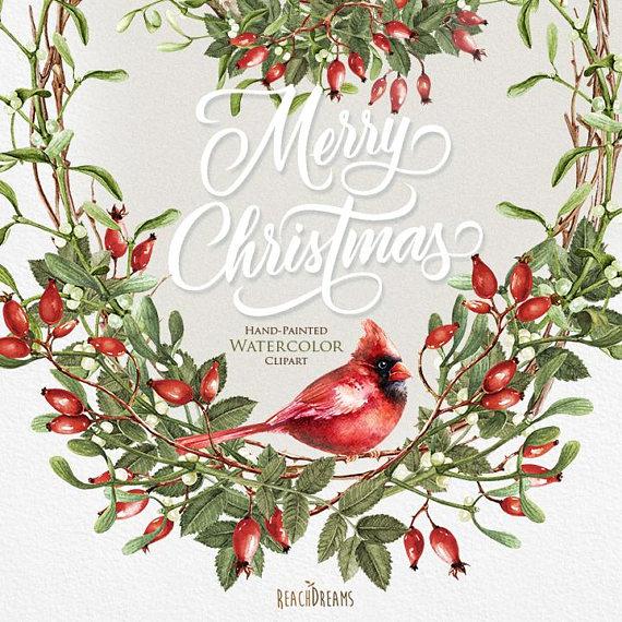 Watercolor christmas mistletoe briar. Cardinal clipart decoration