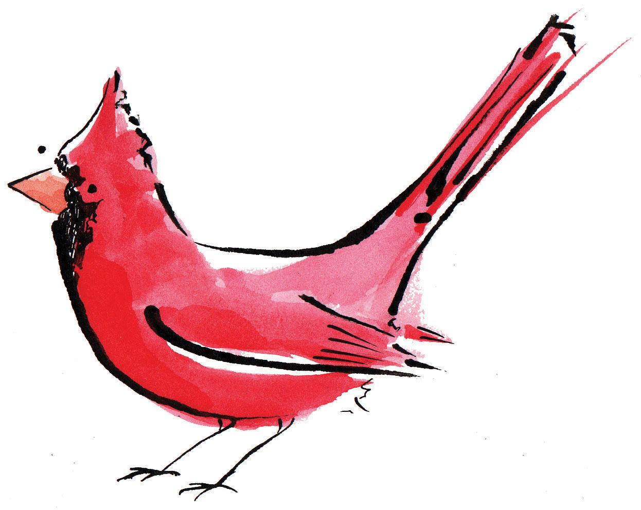 Red drawing at getdrawings. Cardinal clipart drawn