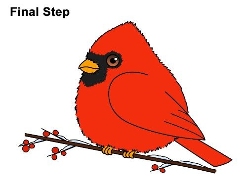 Cardinal clipart drawn. Draw a cute cartoon