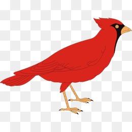 Cardinal clipart file. Bird png images vectors