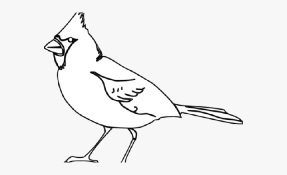 Cardinal clipart file. Outline