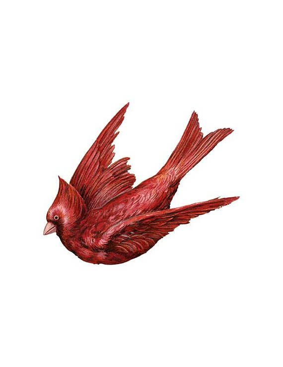 Png red bird clip. Cardinal clipart flying