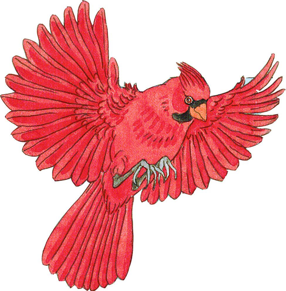 Drawing at getdrawings com. Cardinal clipart flying