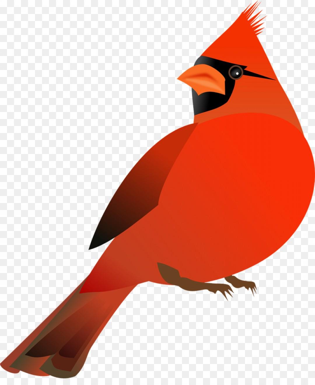 St louis cardinals x. Cardinal clipart illustration