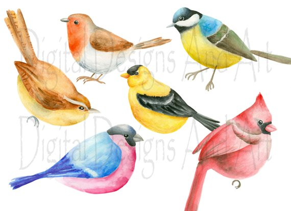 Bird watercolor birds clip. Cardinal clipart illustration