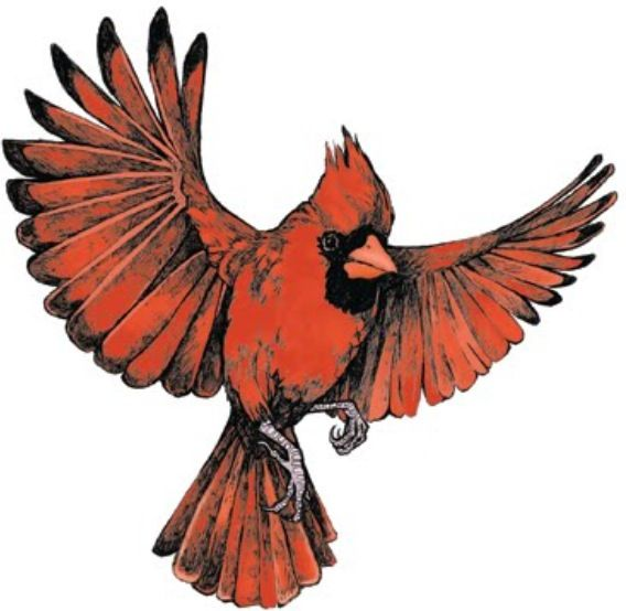 Cardinal clipart in flight. Flying inked inspiration pinterest