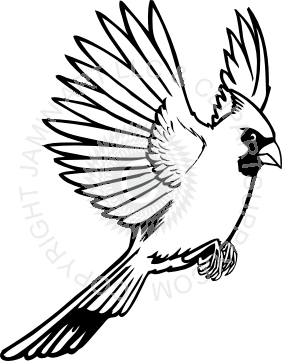 Cardinal clipart in flight. Red flying drawing images