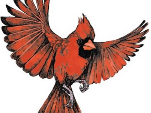Free download clip art. Cardinal clipart in flight