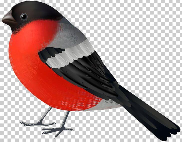 Cardinal clipart in flight. Bird northern png animals