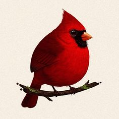 Red on a branch. Cardinal clipart kawaii